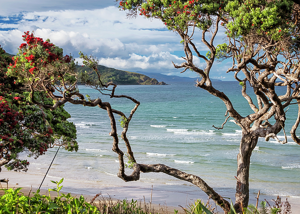 Joan Carroll - Great Barrier Island New Zealand View