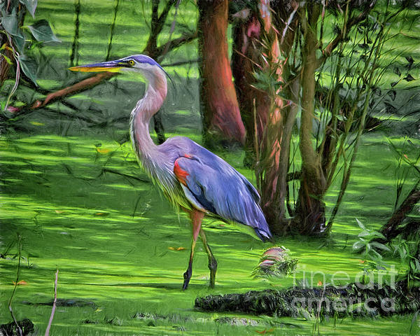 TN Fairey - Great Blue Heron Mixed Media Digital art