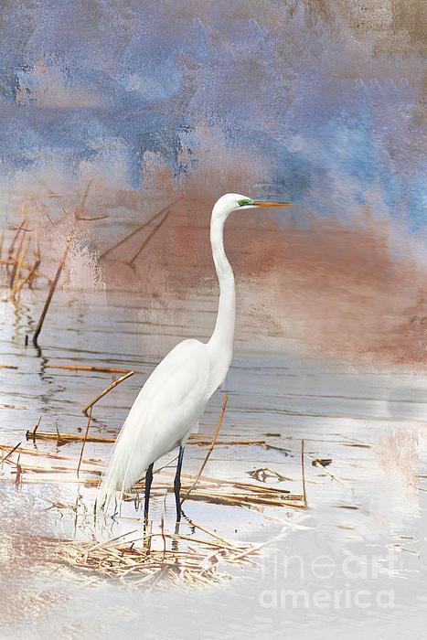 Regina Geoghan - Great Egret - NJ Marshland