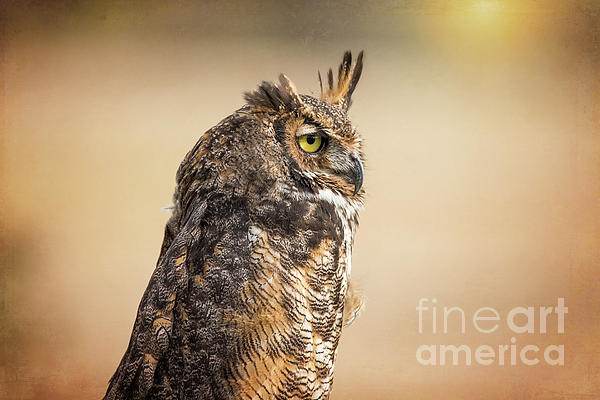 Sharon McConnell - Great Horned Owl At Dusk