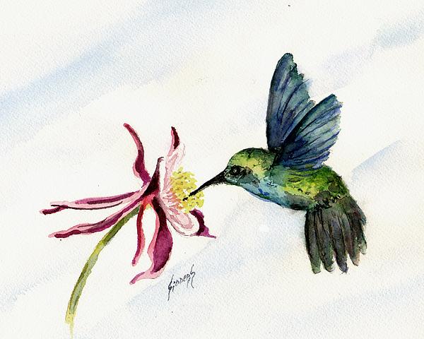 Sam Sidders - Green Violet-Ear Hummingbird