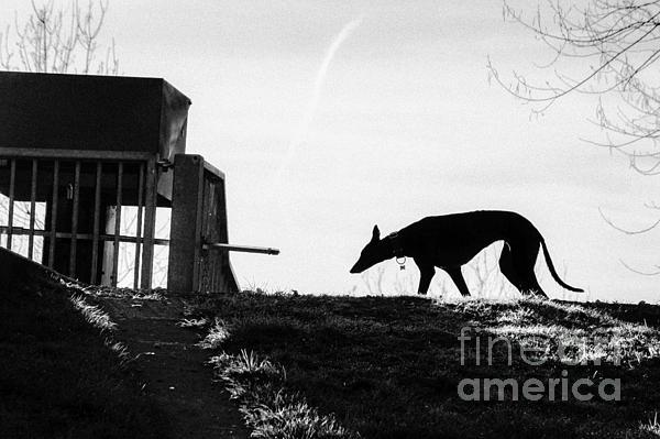 Michael Doherty - Greyhound Silhouette