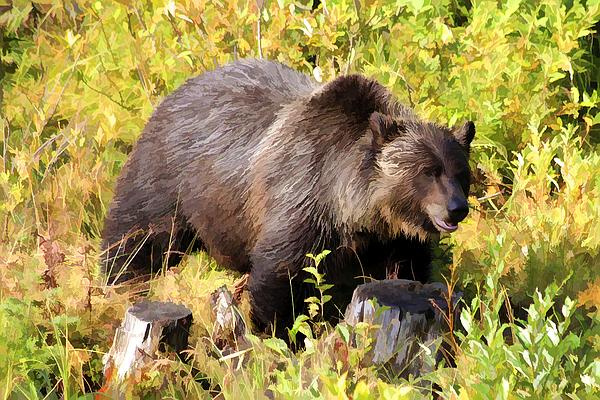 Teresa Zieba - Grizzly Bear