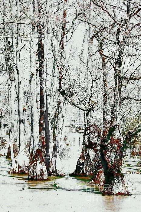 Dan Carmichael - Guardians of the Cypress Swamp FX