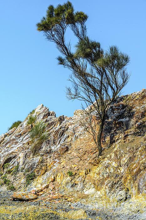 Werner Padarin - Guerilla Bay Tree