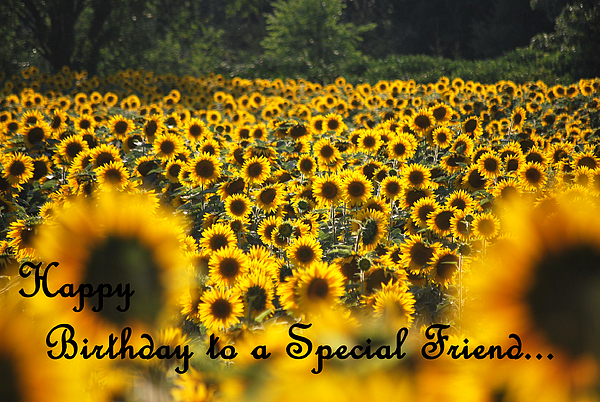 Happy Birthday - Special Friend Sunflowers Greeting Card