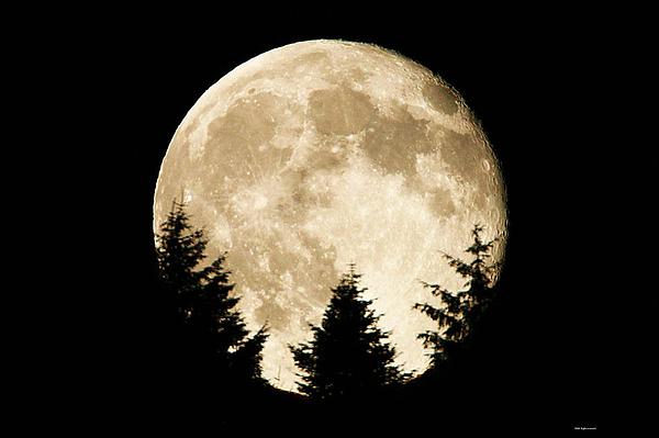 Paul Baker - Harvest Moon