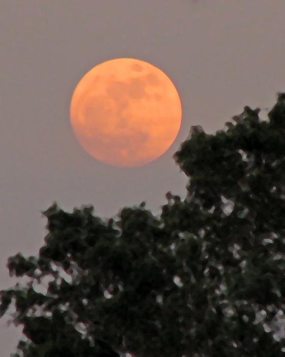 Peg Urban - Harvest Moonrise