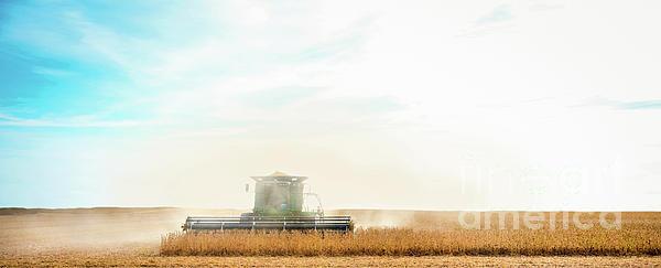 Melinda Pritzel - Harvest Time