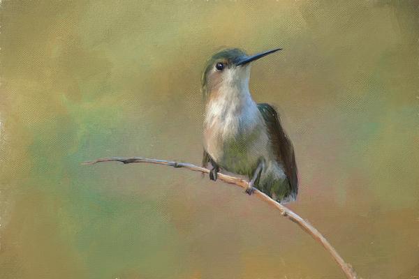 Jai Johnson - Hello Little Friend Hummingbird Painting