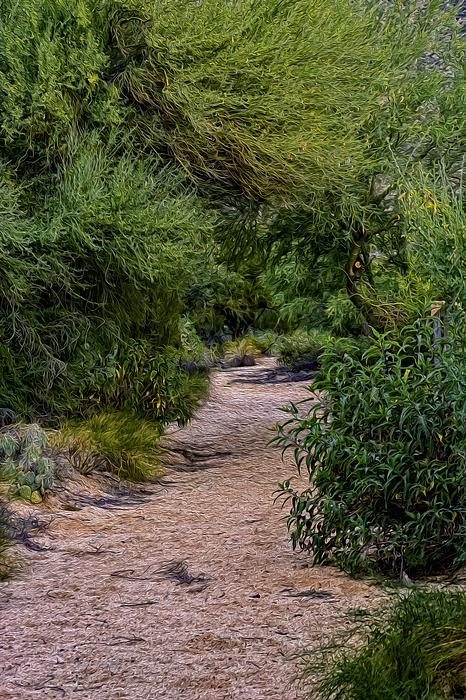Hidden Path No24 Photograph