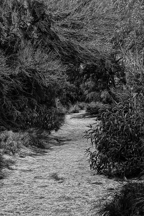 Hidden Path No25 Photograph