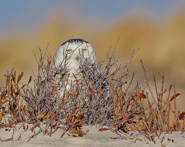 Morris Finkelstein - Hide And Seek With Snowy