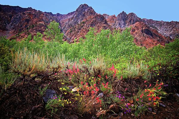 Lynn Bauer - High Sierra Wildflowers