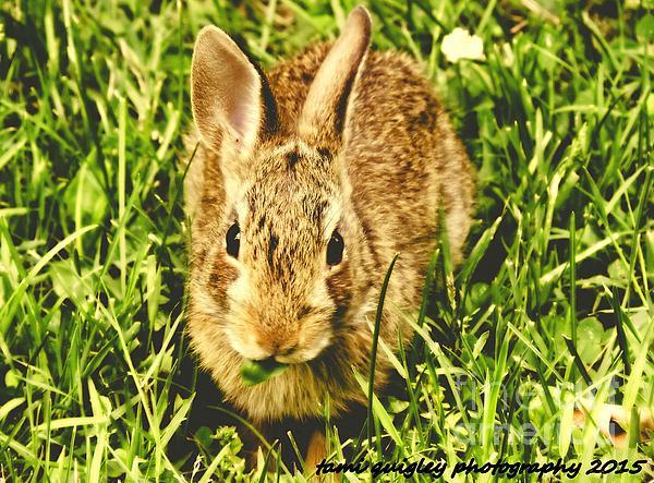 Tami Quigley - Honey Bunny