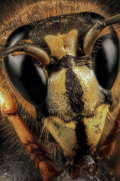 Robert Storost - Hornet Face