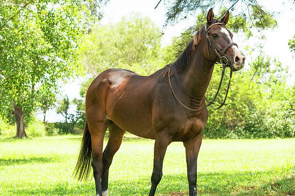 Elena Riim - Horse