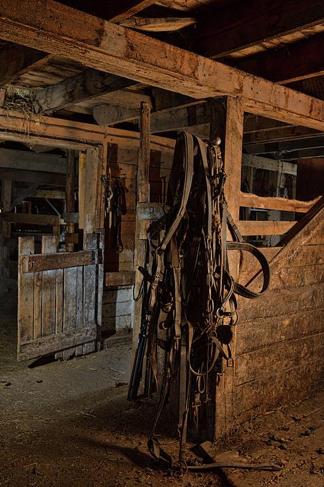 Alana Thrower - Horse Harness 2
