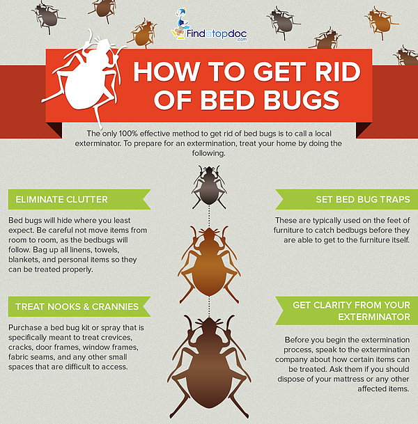 check home tell if get to you bugs how have bed of rid for