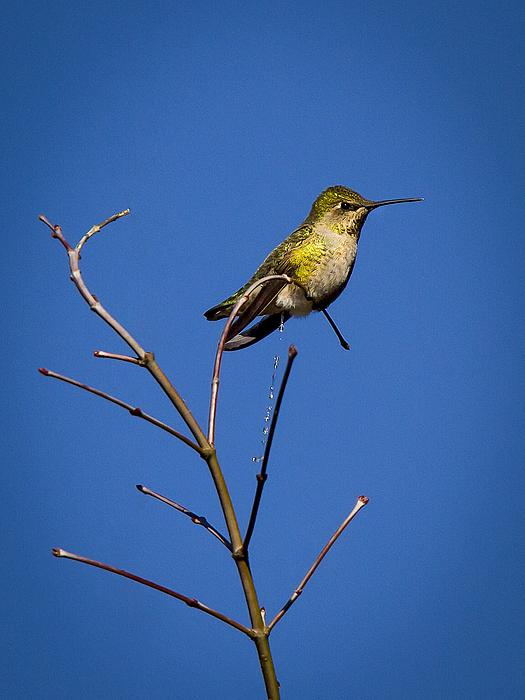 Jean Noren - Humming Bird Evacuation
