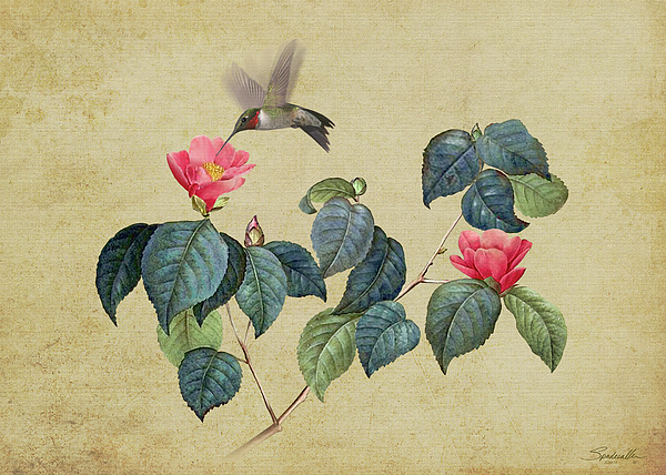 Spadecaller - Hummingbird and Japanese Camillea