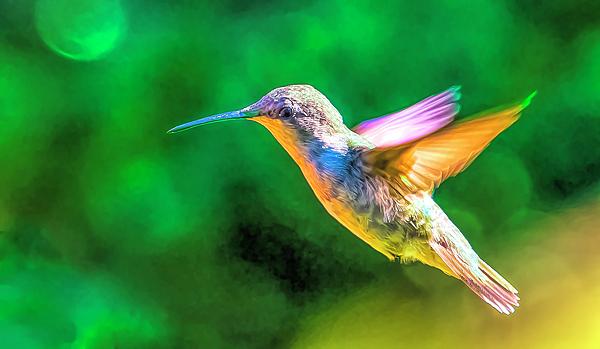 Barbara Molocznik - Hummingbird Colors