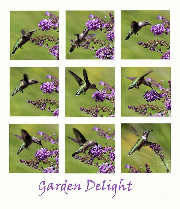 Karen Adams - Hummingbird Garden Delight