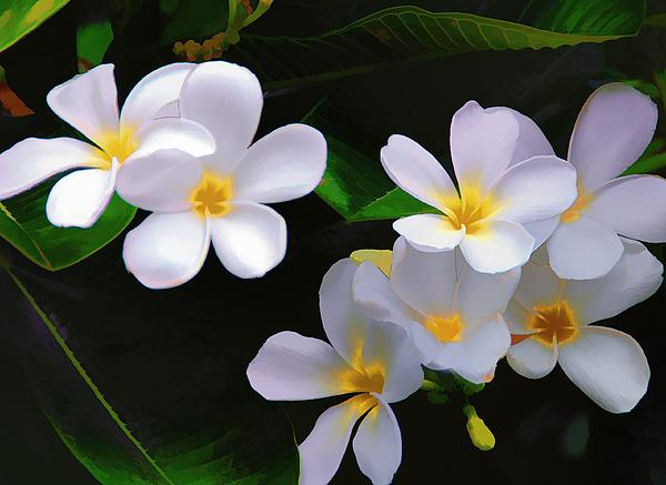 Diane Wood - In Bloom