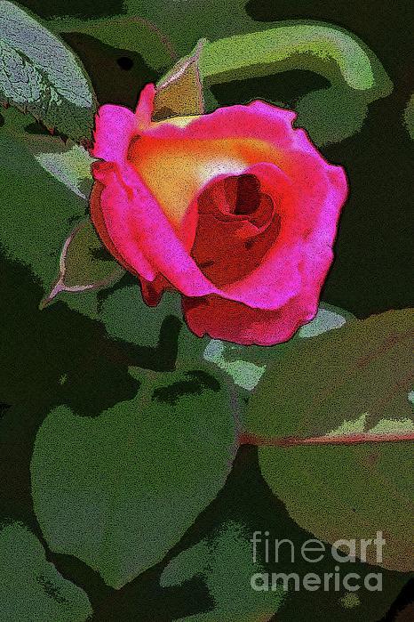 Craig Wood - Inner Rose