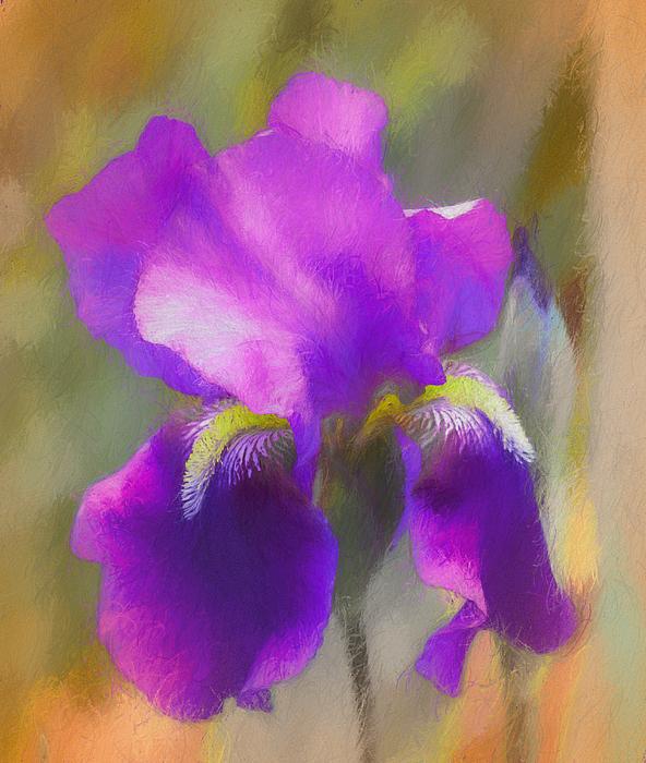 Lisa Bell - Iris Beauty