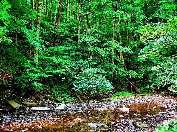 Kathy K McClellan - Jefferson Lake Creek