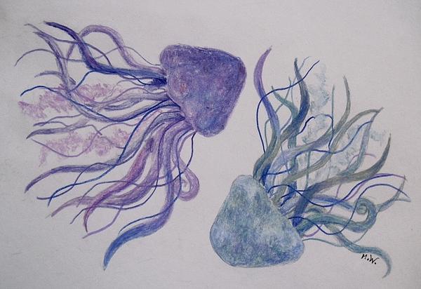 Megan Walsh - Jellyfish study
