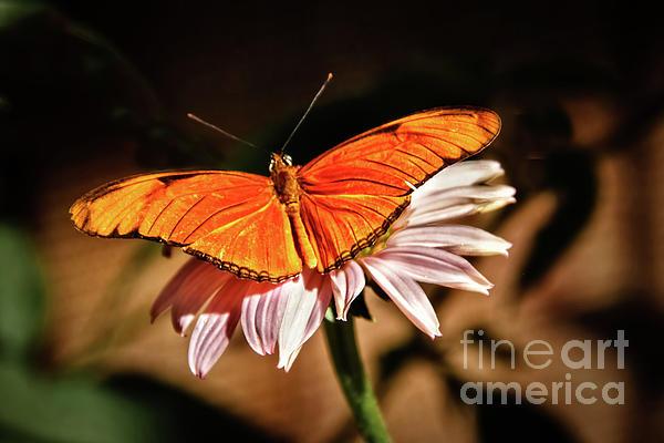 Robert Bales - Julia Butterfly