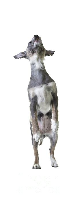 Jumping Dog Tee Photograph