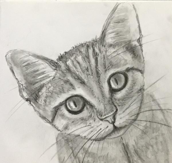 Anthony Masterjoseph - Kitten