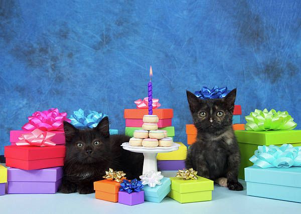 Sheila Fitzgerald - Kitten Birthday Party with a Donut Cake
