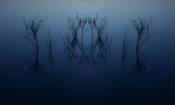 Thomas Morris - Lake Branch Symmetry
