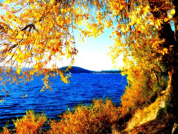 Lake Coeur Dalene Through Golden Leaves Photograph