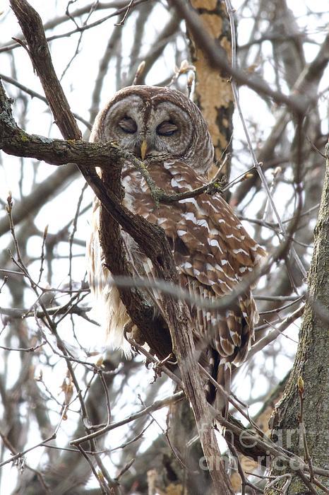 John Franke - Late Night Owl