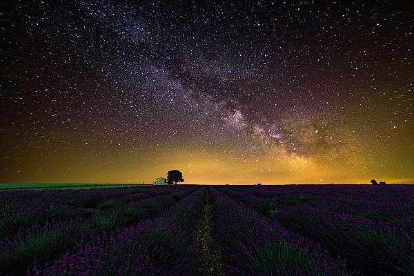 Daniele Bisognin - Lavader under the stars