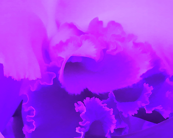Aimee L Maher Photography and Art Visit ALMGallerydotcom - Lavender Orchid Amethyst