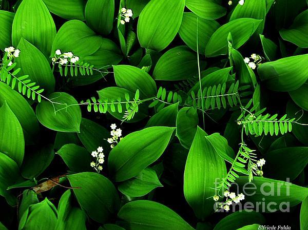 Elfriede Fulda - Lily of the Valley