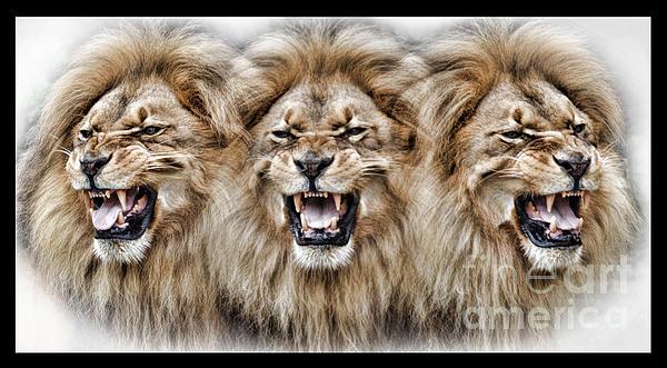 Jim Fitzpatrick - Lions Roar II