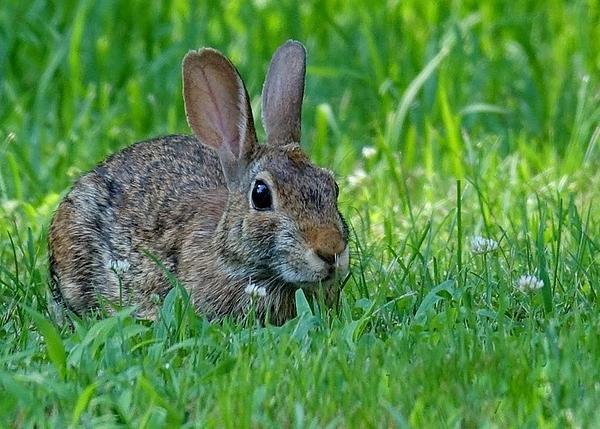 Lori Pessin Lafargue - Little Rabbit Frou Frou