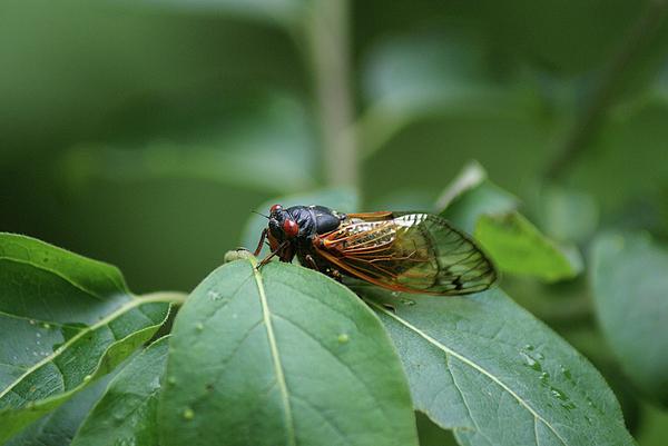 Rick Friedle - Locust