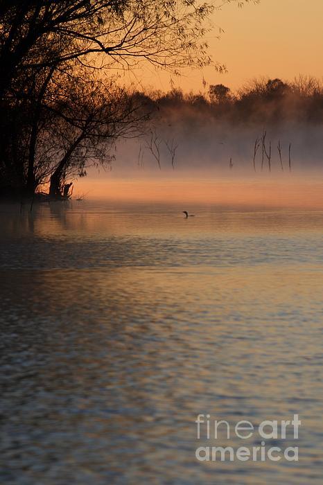 John Franke - Lone Duck At Sunrise