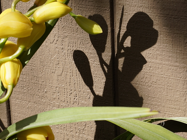 YT Photo - Love Of Orchid Buds