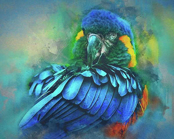 Brian Tarr - Macaw Magic