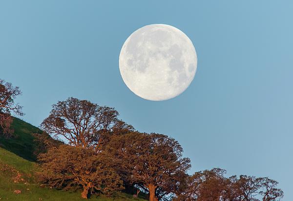 Marc Crumpler - March Moonset