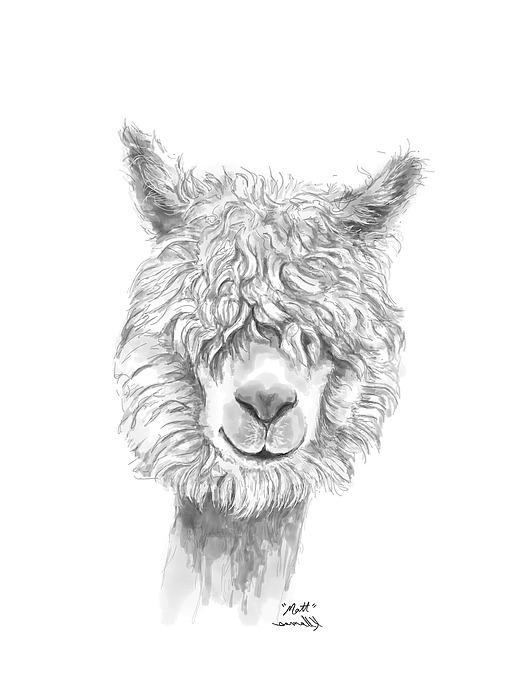Matt Drawing